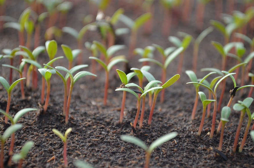 the fundamental seeds to sow